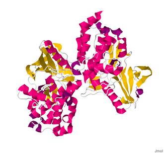 Myosin light-chain kinase - Image: 2X4F.pdb