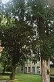 46-106-5009 тиси біля пам'ятника Міцкевичу.jpg