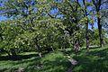 48-104-5002 Komsomol park DSC 4434.jpg