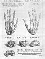 A. Vesalius, bones of hand, with text above Wellcome L0029563.jpg