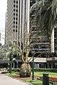 ANZAC Square Bottle Tree has died-1 (33021916026).jpg