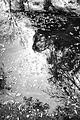 AZ - SYCAMORE CANYON (21) (10468940664).jpg