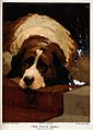A St Bernard dog resting on the steps of a staircase. Colour Wellcome V0021884.jpg