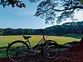 A bike in Sunken Garden, U.P. Diliman, Quezon City.jpg