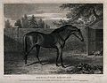 A horse in a yard Wellcome V0048117.jpg