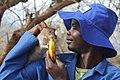 A man working at the Apopo rat training in Tanzania ...0.jpg