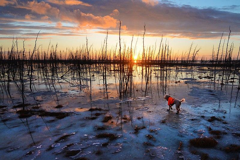 File:Goose Lake Park, Anchorage, Alaska ENBLA11.jpg
