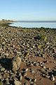 A stony beach - geograph.org.uk - 1061845.jpg
