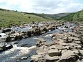 Above High Force. - geograph.org.uk - 161.jpg