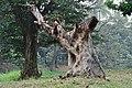 Acharya Jagadish Chandra Bose Indian Botanic Garden - Howrah 2011-02-20 1678.JPG