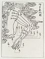 Acupuncture points and meridians. The arm. Wellcome L0035005.jpg