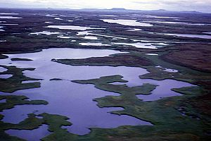 Emergency Wetlands Resources Act - Hazen Bay Wetlands