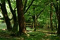 Afternoon in the Wood (27885805667).jpg