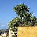 Agrigento, Италия - panoramio (1).jpg