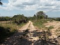 Alameda Cândido Brasil Moro - Palma - Santa Maria, foto 02 (sentido N-S).jpg - panoramio.jpg