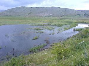 Aldomirovsko blato.JPG