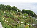 Allotments, Penlee Point - geograph.org.uk - 484713.jpg