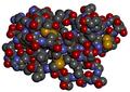 Alpha-cobratoxin space fill.png