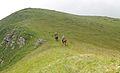 Alpine meadows in the Caucasus.jpg
