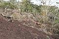 Alto Araguaia - State of Mato Grosso, Brazil - panoramio (1113).jpg
