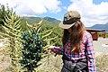 Alto ancoa cabañas Puya Chilensis.jpg