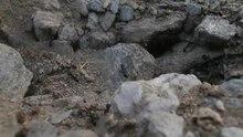 File:Ameisen krabbeln.webm