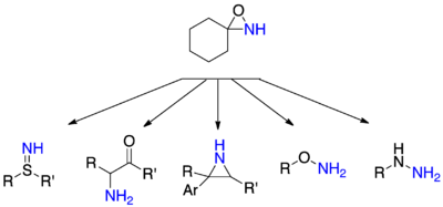 Selected amination reactions with oxaziridine