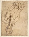 Anatomical Studies of a Leg (recto); Study of a Leg (verso) MET DP810668.jpg