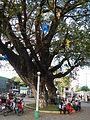 Anda,Pangasinanjf6361 40.JPG