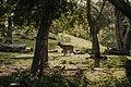 Andhika bayu nugraha-taman nasional komodo.jpg