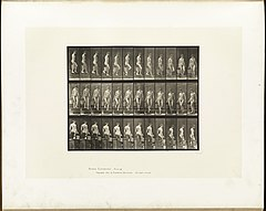 Animal locomotion. Plate 145 (Boston Public Library).jpg