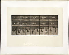 Animal locomotion. Plate 708 (Boston Public Library).jpg