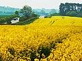 Another Wiltshire oilfield, Chiseldon, Swindon - geograph.org.uk - 1870093.jpg