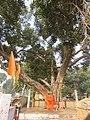 Around and near Anand Bhavan, Swaraj Bhavan, Allahabad, IRCTC 2017 (2).jpg