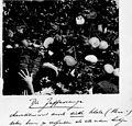 Arthur and Fritz Kahn Collection 1889-1932 (19716436434).jpg