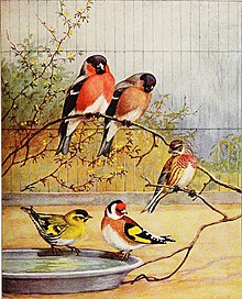 Articles about birds from National geographic magazine ((19-?)-(193-?)) (20800325045).jpg