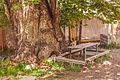 Asagi anbaras meydan ordubad naxcivan azerbaycan cinar agaci svln4821.jpg