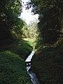 Ash Spring Wood, Drax - geograph.org.uk - 584449.jpg