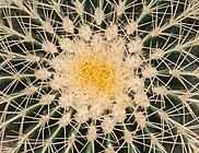 Asiento de suegra (Echinocactus grusonii), Jardín Botánico, Múnich, Alemania, 2013-09-08, DD 02.JPG