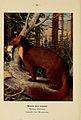 Atlas de poche des mammifères de France, de la Suisse romane et de la Belgique (Pl. 30) (6312167968).jpg