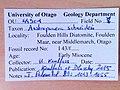 Austroponera schneideri OU44901 specimen tag.jpg