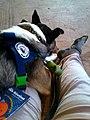 Autism Service Dog.jpg