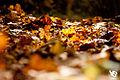 Autumn (5131276015).jpg
