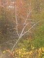 Autumn came (2008). (9705074819).jpg