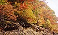 Autumn colours in Glyn-Hafren Wood - geograph.org.uk - 574035.jpg