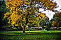 Autumn in Beddington Park London Borough of Sutton.jpg