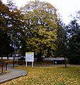 Autumnal Colour - Providence House - geograph.org.uk - 1546420.jpg
