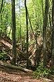 Axeltorps skogar 2020-2.jpg