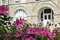 Azaleas in front of Gibson Hall (3314106009).jpg