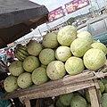 B.fruit.jpg